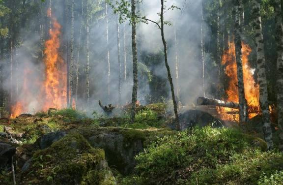В Красноярском крае горит почти 70 тысяч гектаров леса